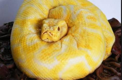torta serpente