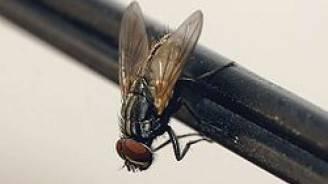 img1024-700_dettaglio2_mosca