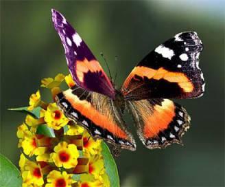 +-farfalle-1