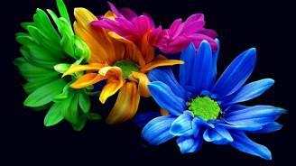 colorati_fiori