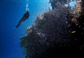 luoghi-migliori-per-le-immersioni