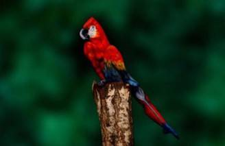 non-è-un-pappagallo