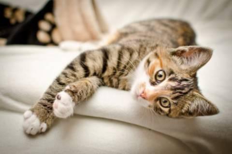 gatto-domestico-e1347356642989