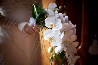 11-orchidea