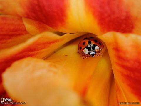 Foto per desktop meravigliose gratis for Immagini desktop natura