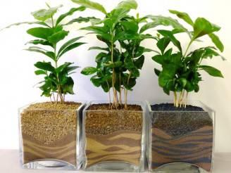 piante-da-appartamento-idea-green