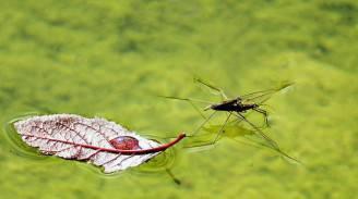 rimedi-naturali-zanzare