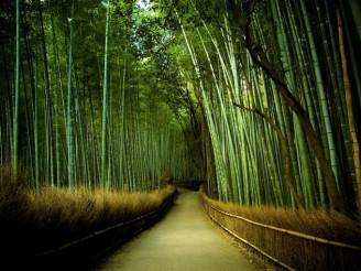 foresta bamboo in giappone