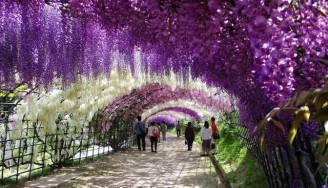 tunnel di fiori in giappone