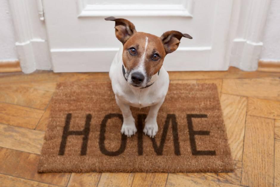 Vertrauen Hund 980x653 e1413828169716 5 cose da sapere per far convivere animali domestici e vicini di casa