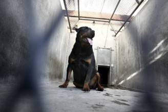 Rottweiler (FRED DUFOUR/AFP/Getty Images)