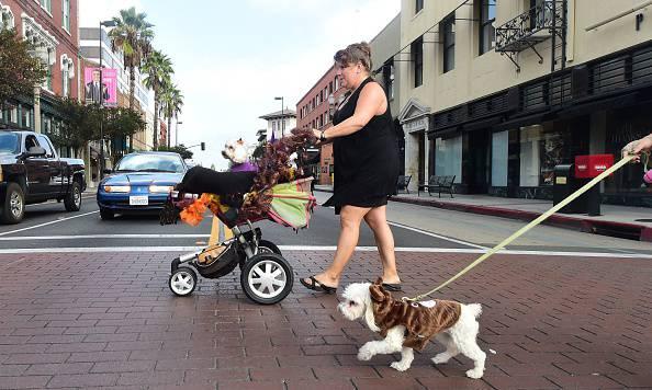 US-HALLOWEEN-DOGS