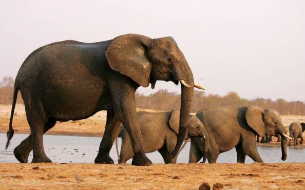 DOUNIAMAG-ZIMBABWE-WILDLIFE-ELEPHANTS-CONSERVATION-WATER