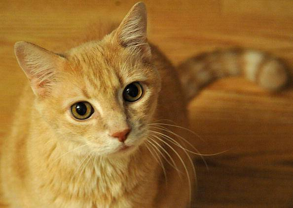 A domestic cat sits in October 17, 2010