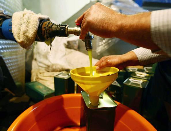 LIBYA-AGRICULTURE-OLIVE-OIL