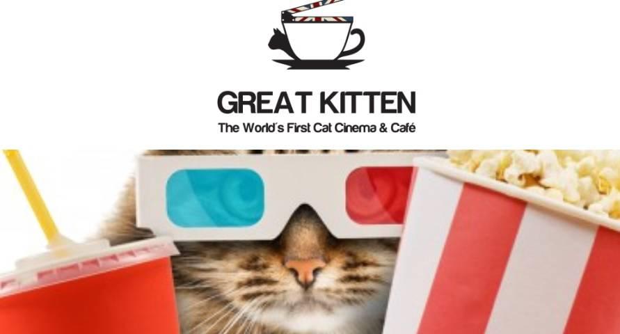 cinema gatti