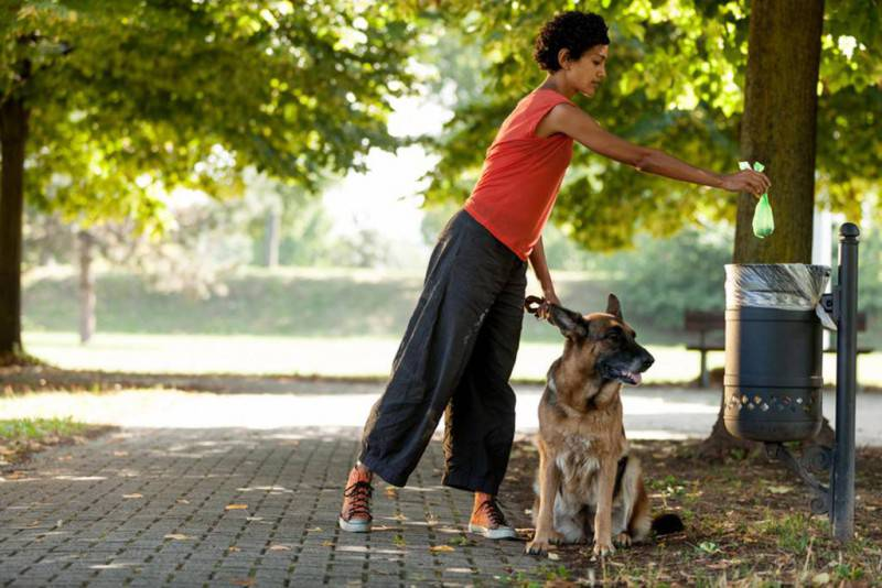 passeggio cane