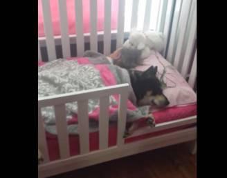 La bimba dorme con il suo cane (screenshot YouTube)