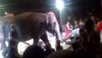 Elefante al circo (screenshot YouTube)