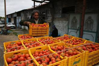 Raccolta di pomodori (SAID KHATIB/AFP/Getty Images)