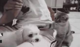 Cane e gatto (screenshot)