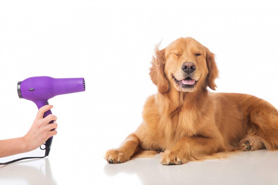 asciugare-il-cane