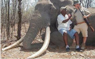 Elefante ucciso in Zimbabwe (screenshot)