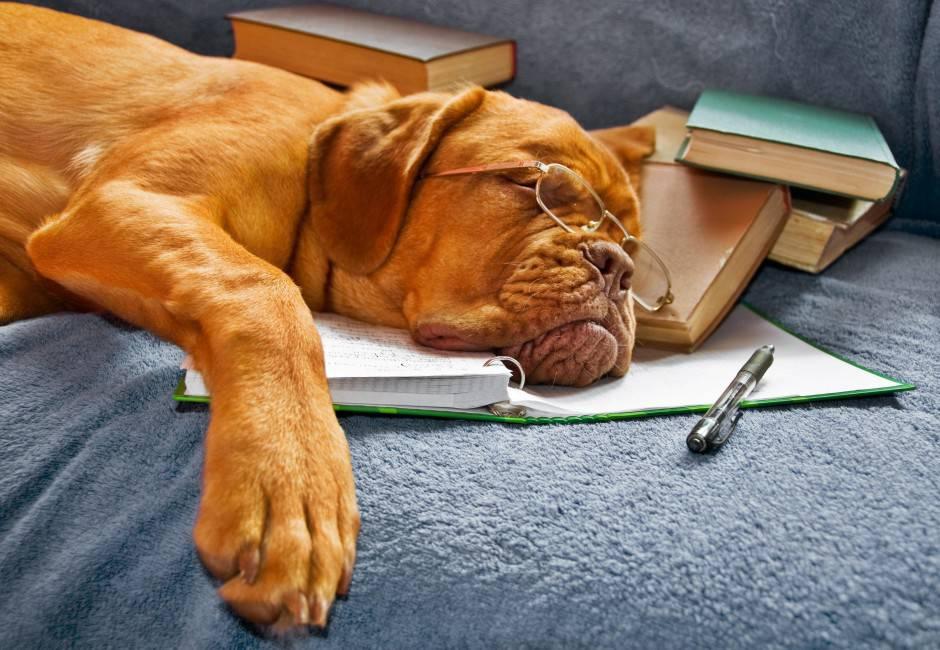 cane che dorme