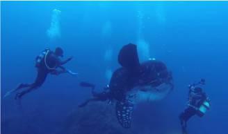 Pesce Luna (Screenshot YouTube)
