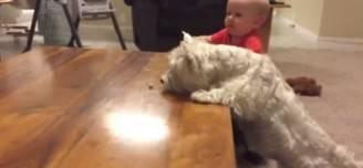 Il Bambino, il cane e il pezzo di pollo (Screenshot)