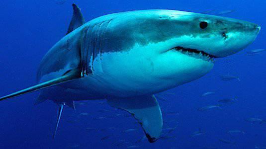 squalo-bianco-535x300