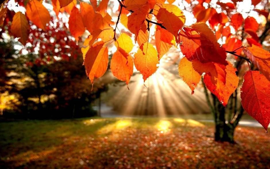 Ansia d'autunno: perché potresti sentirti più stressato in questa stagione?