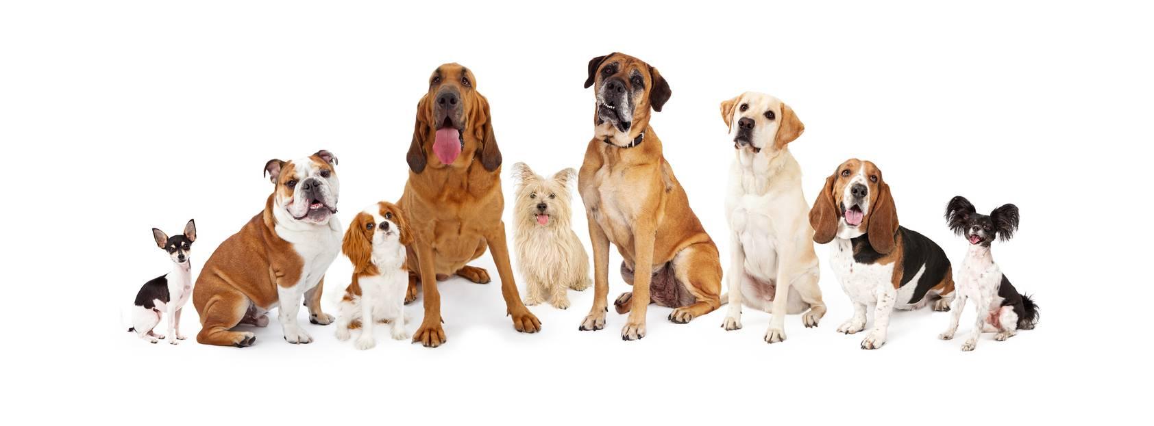 Test dimmi che cane ti piace e ti dir chi sei for Test quale animale sei