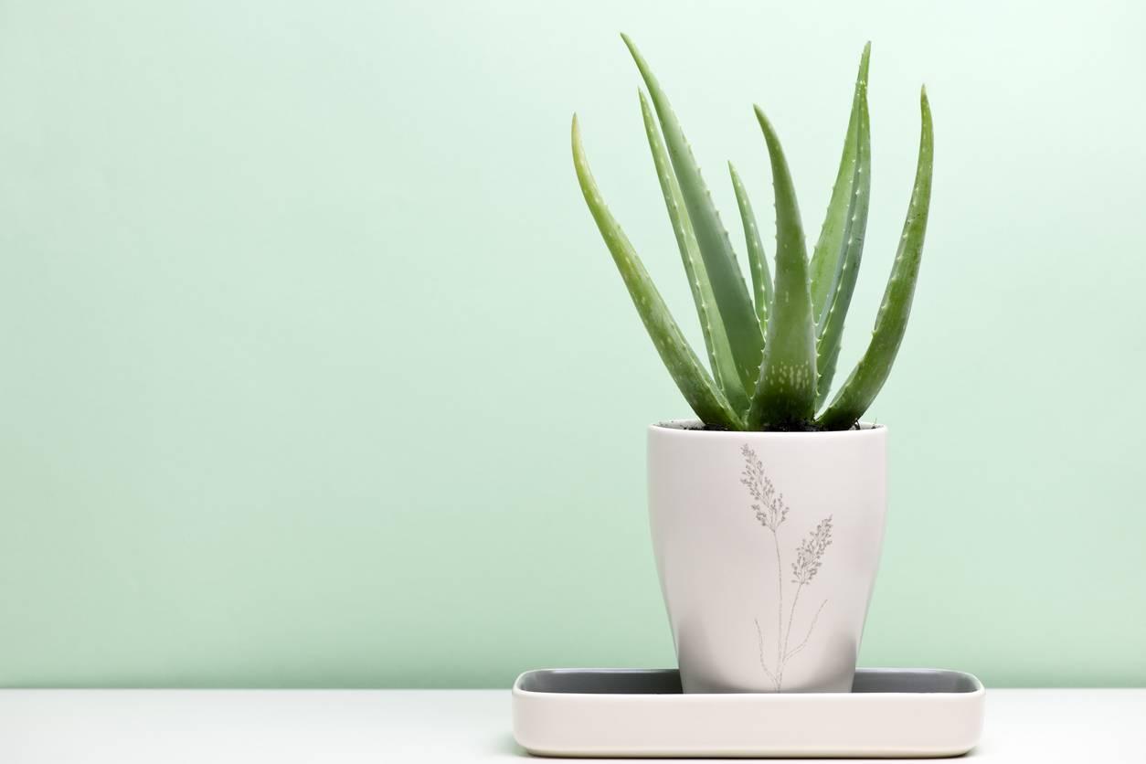 8 piante da mettere nella tua stanza per combattere l'insonnia