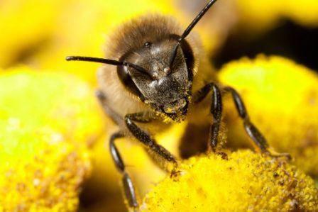 api e cosmesi