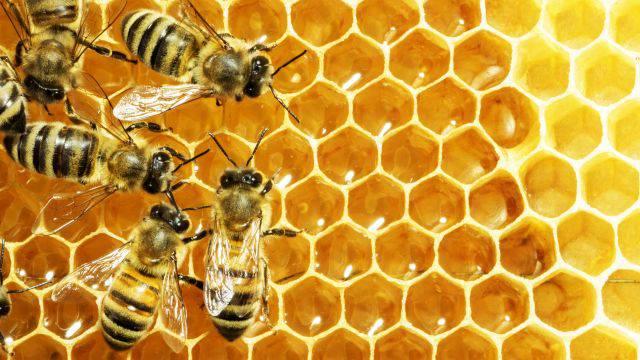cosmetici veleno d'api