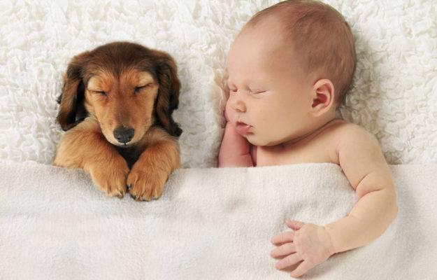cane con neonato