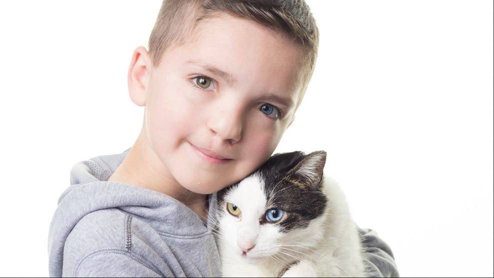 bambino bullizzato gatto