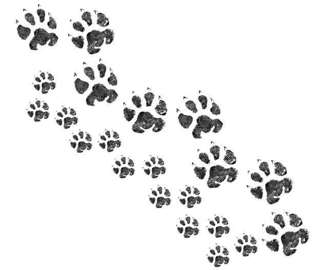 tatuaggi animali