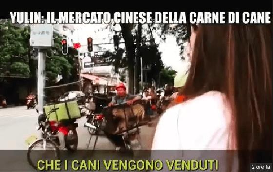 giulia innocenzi iene yulin