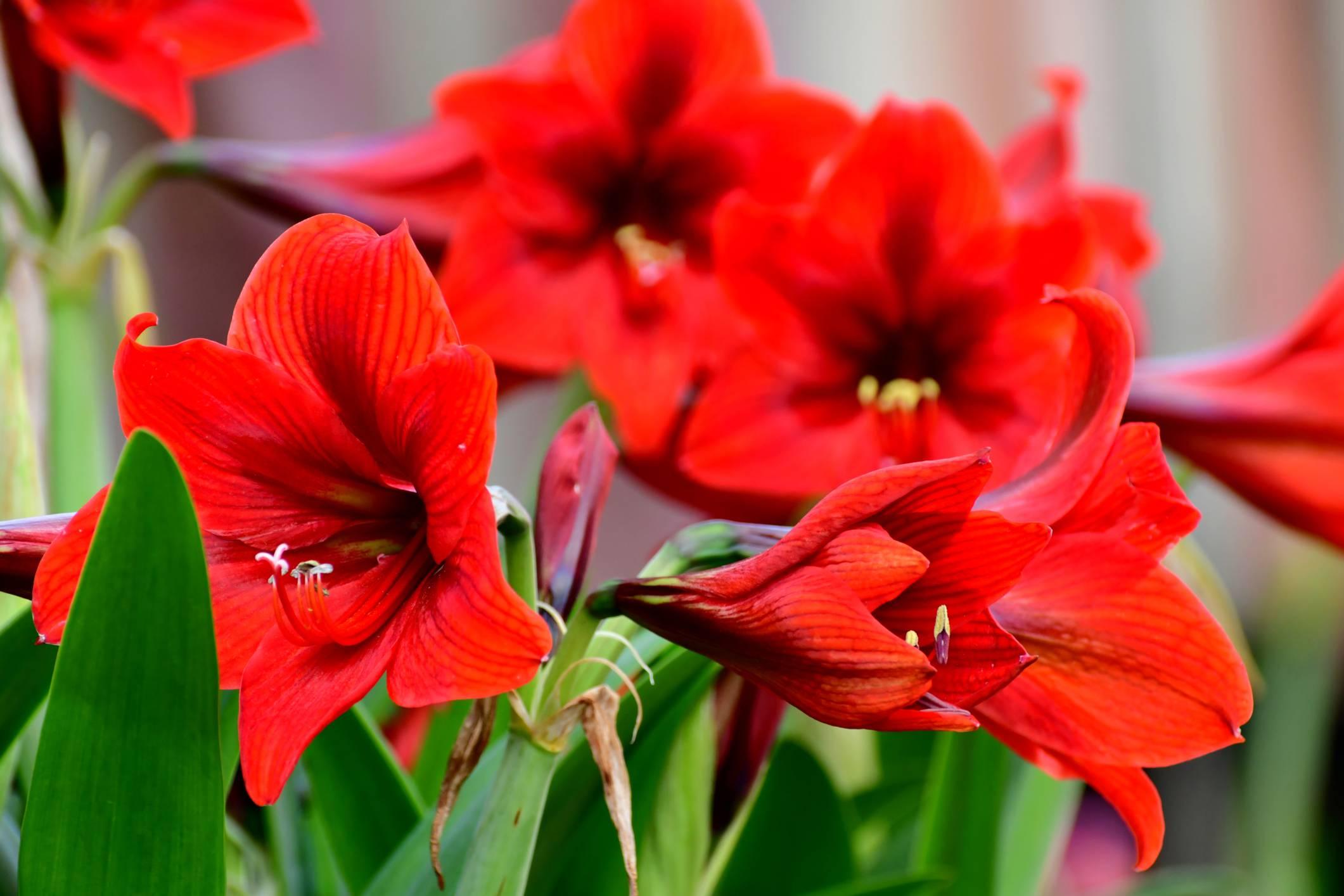 Fiori Del Mese Di Giugno la tua data di nascita corrisponde ad un fiore, scopri il