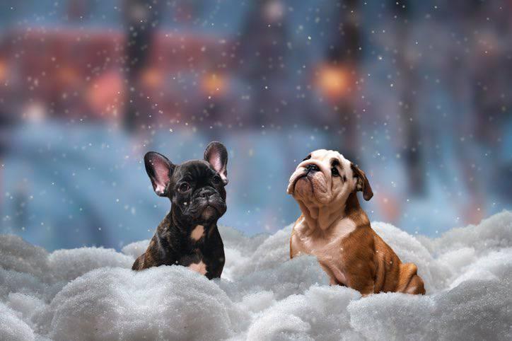 capodanno cane montagna