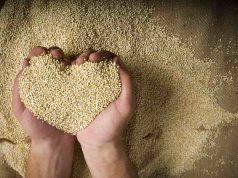 Quinoa, tutte le ricette per gustarla al meglio
