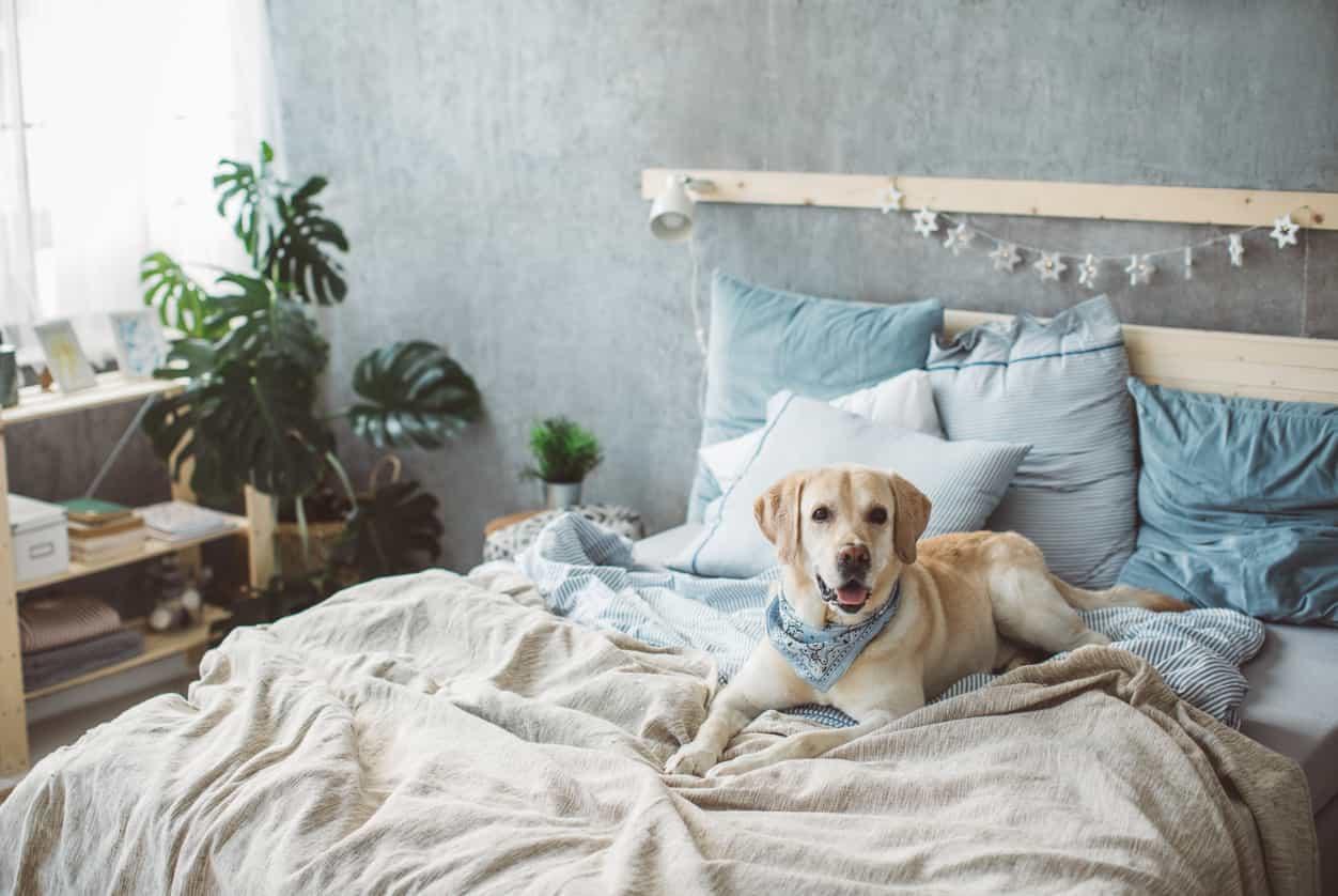 Ecco ogni quanto dovresti cambiare le lenzuola