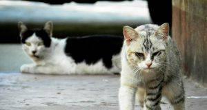 Accarezza un gatto randagio e finisce in sedia a rotelle