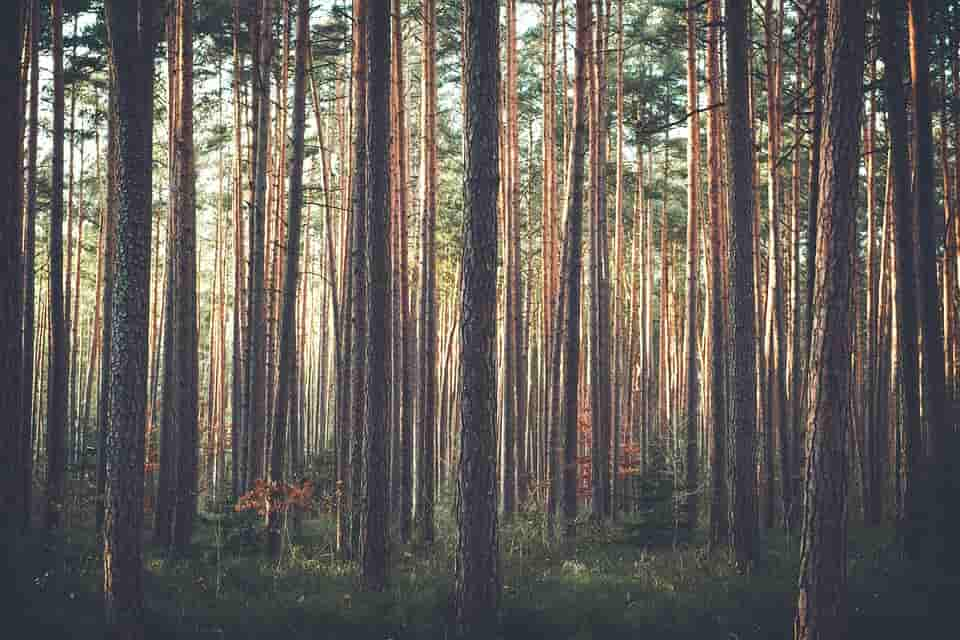 albero da record