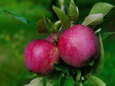 mela annurca per il colesterolo