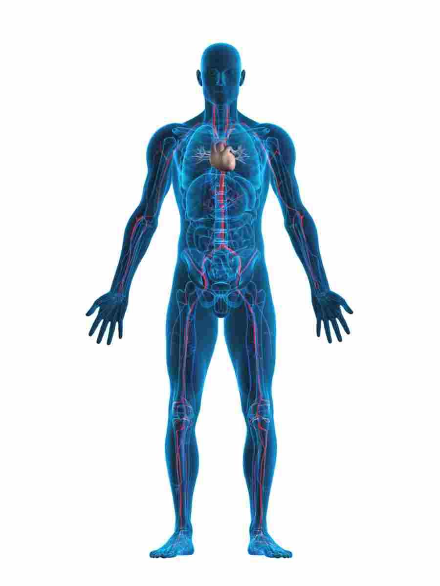 le 6 parti del corpo che non susi