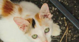 Gatti: l'oggetto comune in casa che rappresenta un pericolo di morte