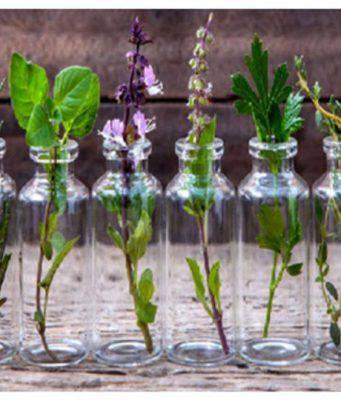 Piante aromatiche: 10 piante che puoi coltivare a casa in una bottiglia d'acqua